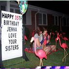 Flamingo Yard Greeting Birthday Rental